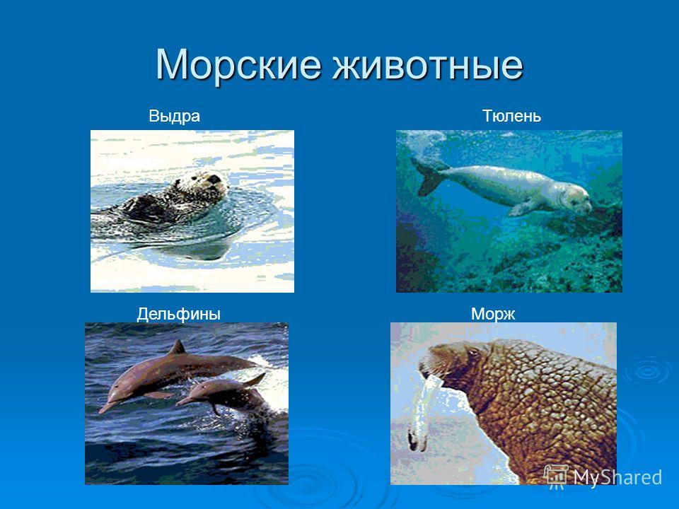 Морские животные Выдра Дельфины Тюлень Морж