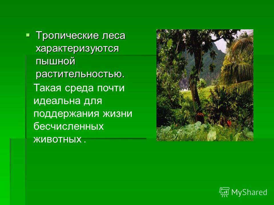Тропические леса характеризуются пышной растительностью. Тропические леса характеризуются пышной растительностью. Такая среда почти идеальна для поддержания жизни бесчисленных животных.