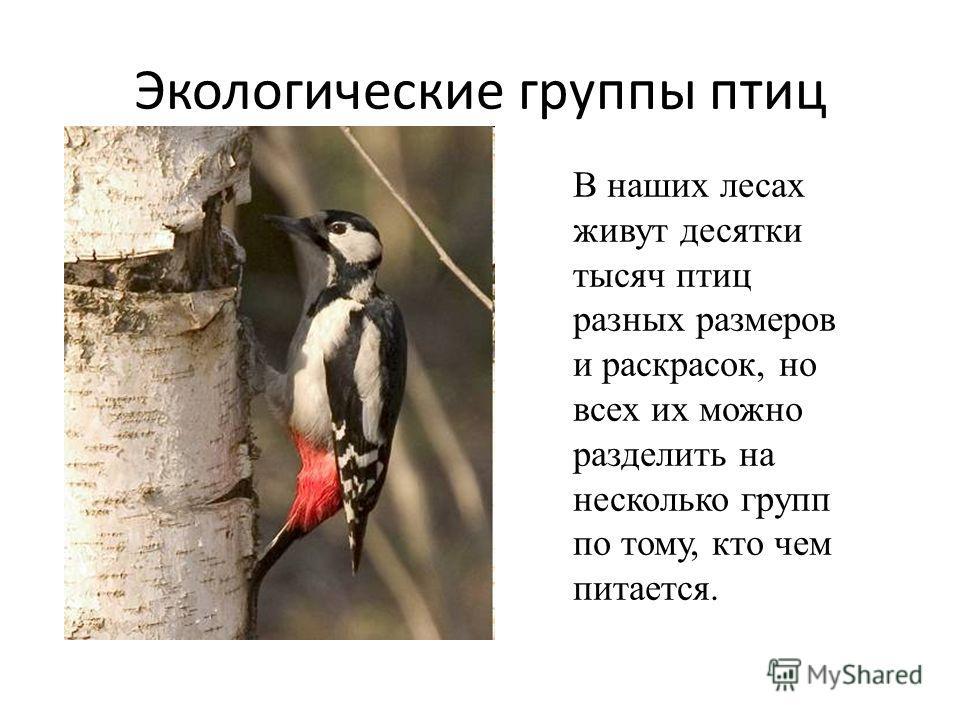 В наших лесах живут десятки тысяч птиц разных размеров и раскрасок, но всех их можно разделить на несколько групп по тому, кто чем питается. Экологические группы птиц