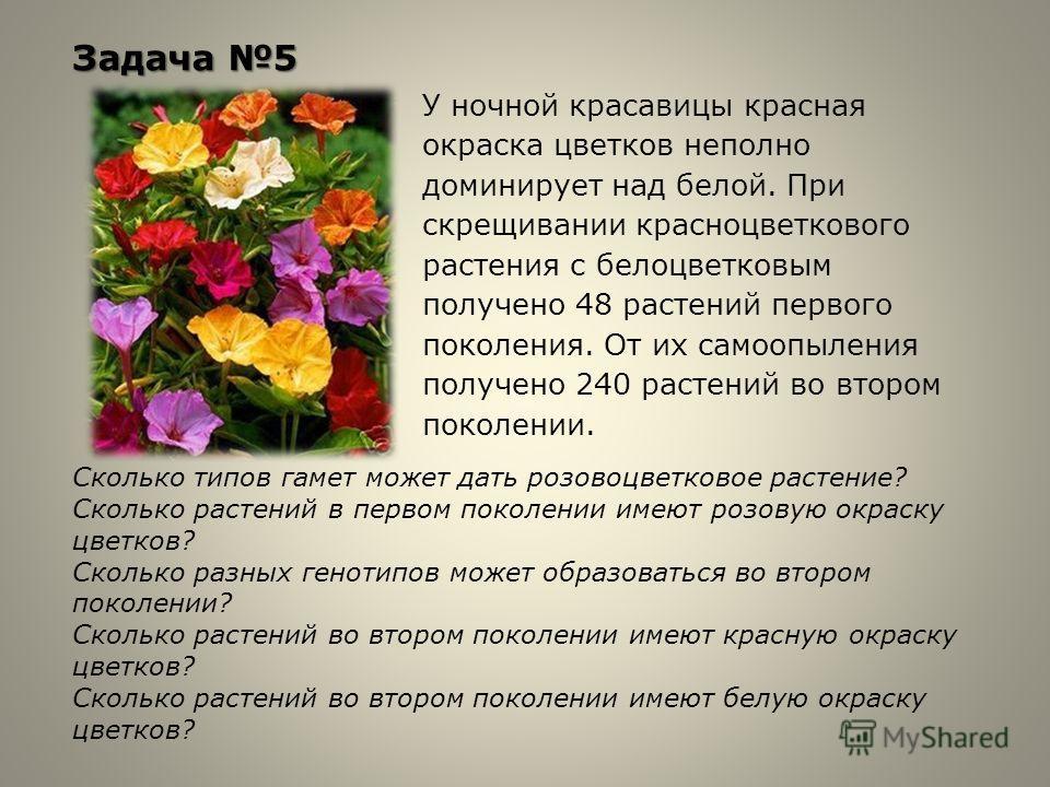 Задача 5 У ночной красавицы красная окраска цветков неполно доминирует над белой. При скрещивании красноцветкового растения с белоцветковым получено 48 растений первого поколения. От их самоопыления получено 240 растений во втором поколении. Сколько