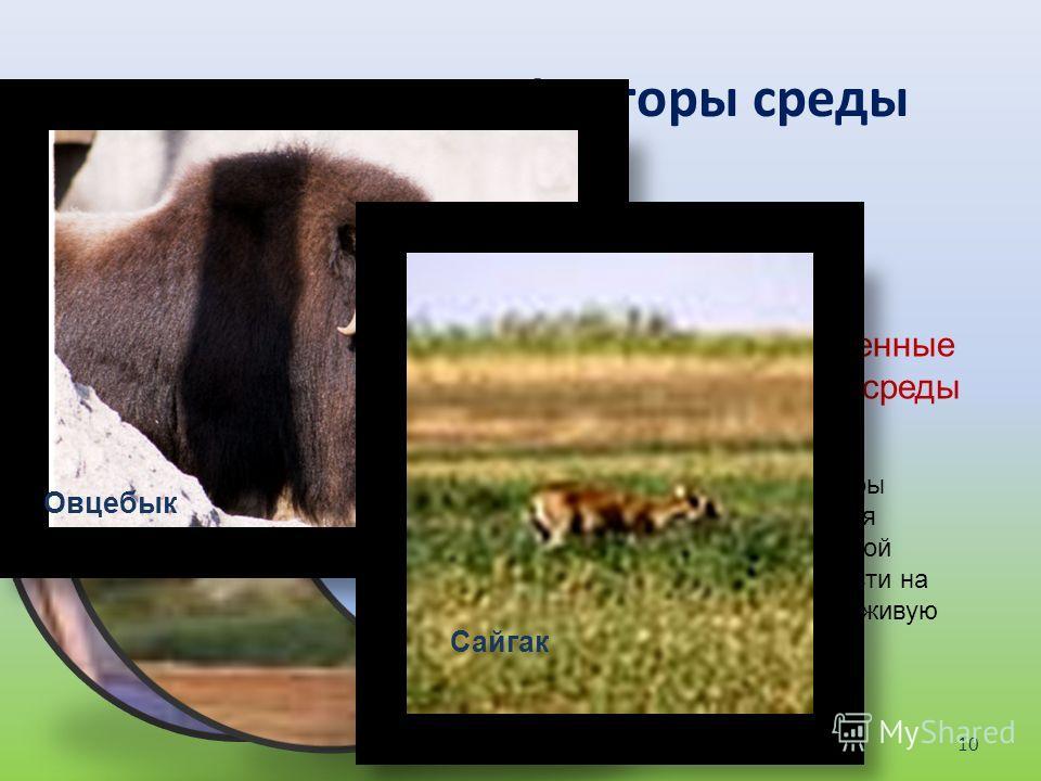 Экологические факторы среды Абиотические факторы среды Биотические факторы среды Антропогенные факторы среды Это факторы неживой природы ( свет, ветер, дождь, температура, давление) Это связи между разными живыми организмами : Паразитизм Симбиоз хищн