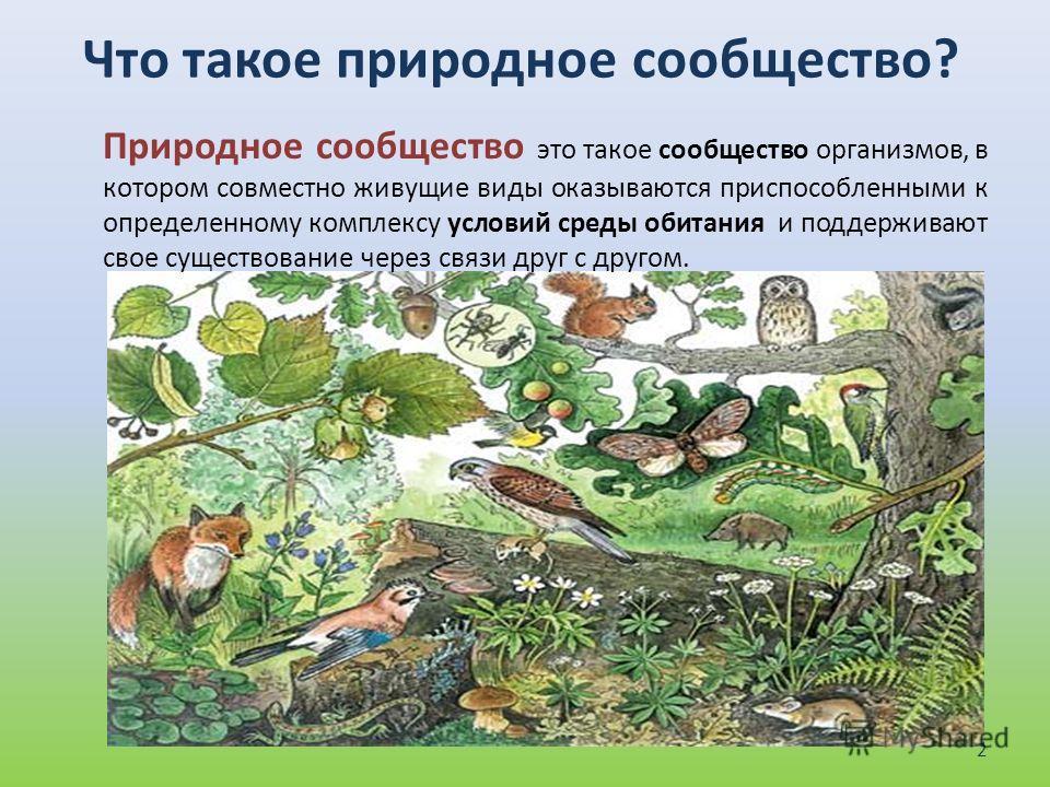 Что такое природное сообщество? Природное сообщество это такое сообщество организмов, в котором совместно живущие виды оказываются приспособленными к определенному комплексу условий среды обитания и поддерживают свое существование через связи друг с