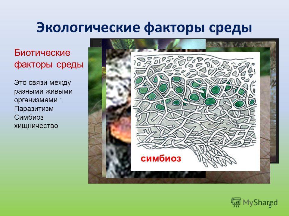 Экологические факторы среды Биотические факторы среды Это связи между разными живыми организмами : Паразитизм Симбиоз хищничество хищник паразит симбиоз 5