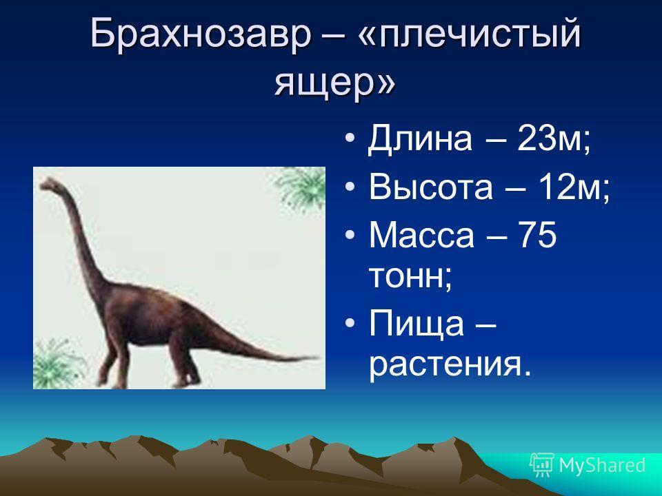 Брахнозавр – «плечистый ящер» Длина – 23м; Высота – 12м; Масса – 75 тонн; Пища – растения.