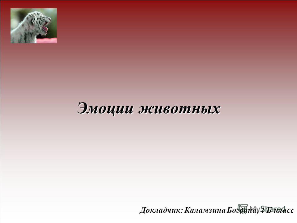 Эмоции животных Докладчик: Каламзина Богдана, 4 Б класс
