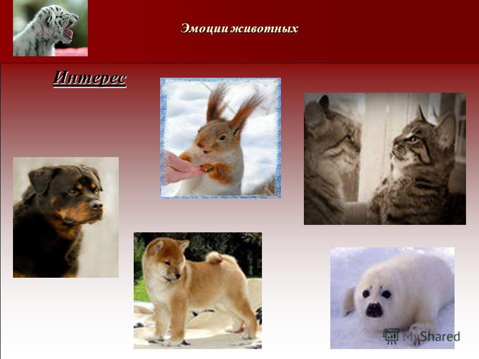 Эмоции животных Интерес