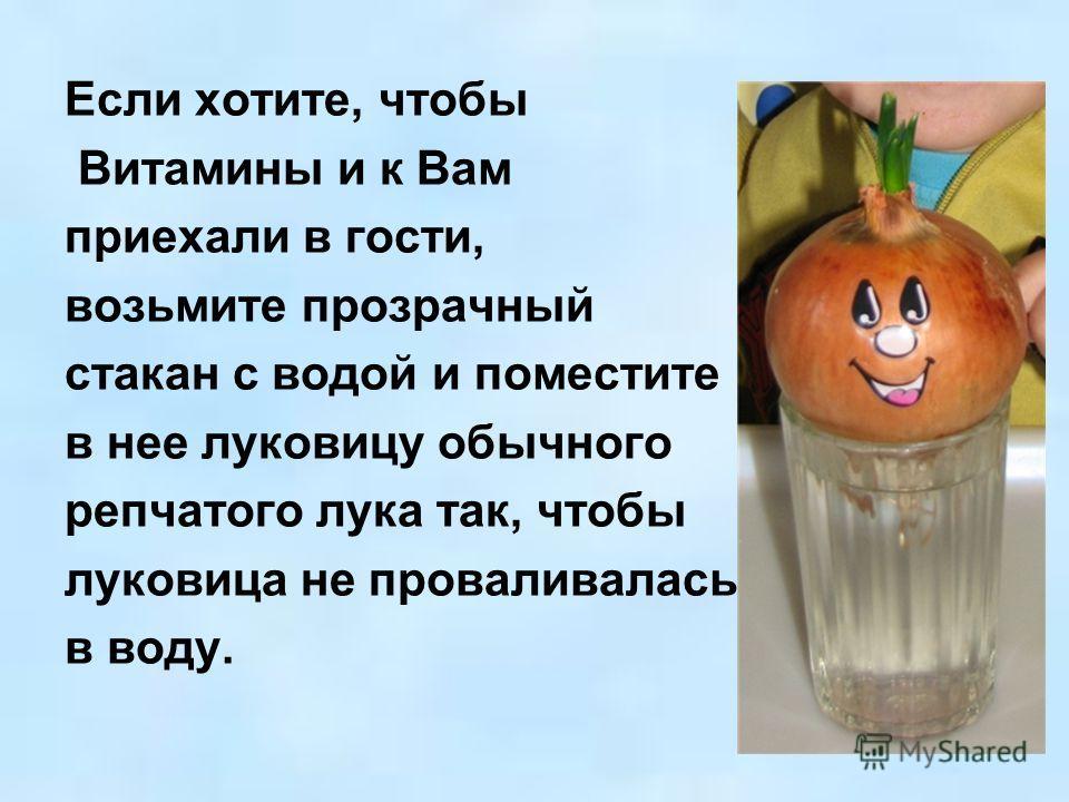 Если хотите, чтобы Витамины и к Вам приехали в гости, возьмите прозрачный стакан с водой и поместите в нее луковицу обычного репчатого лука так, чтобы луковица не проваливалась в воду.