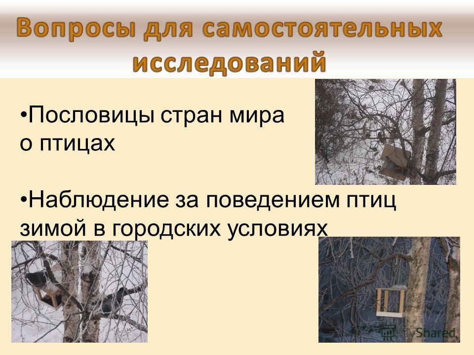 Пословицы стран мира о птицах Наблюдение за поведением птиц зимой в городских условиях