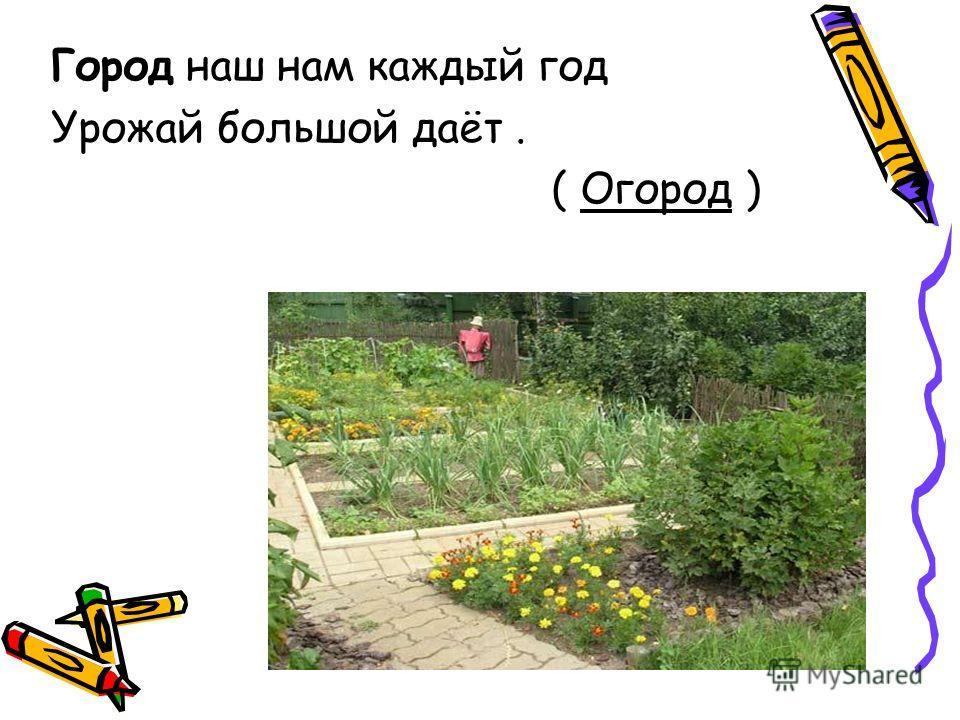 Город наш нам каждый год Урожай большой даёт. ( Огород )