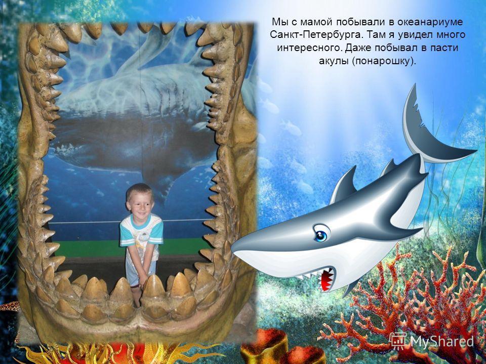 Мы с мамой побывали в океанариуме Санкт-Петербурга. Там я увидел много интересного. Даже побывал в пасти акулы (понарошку).