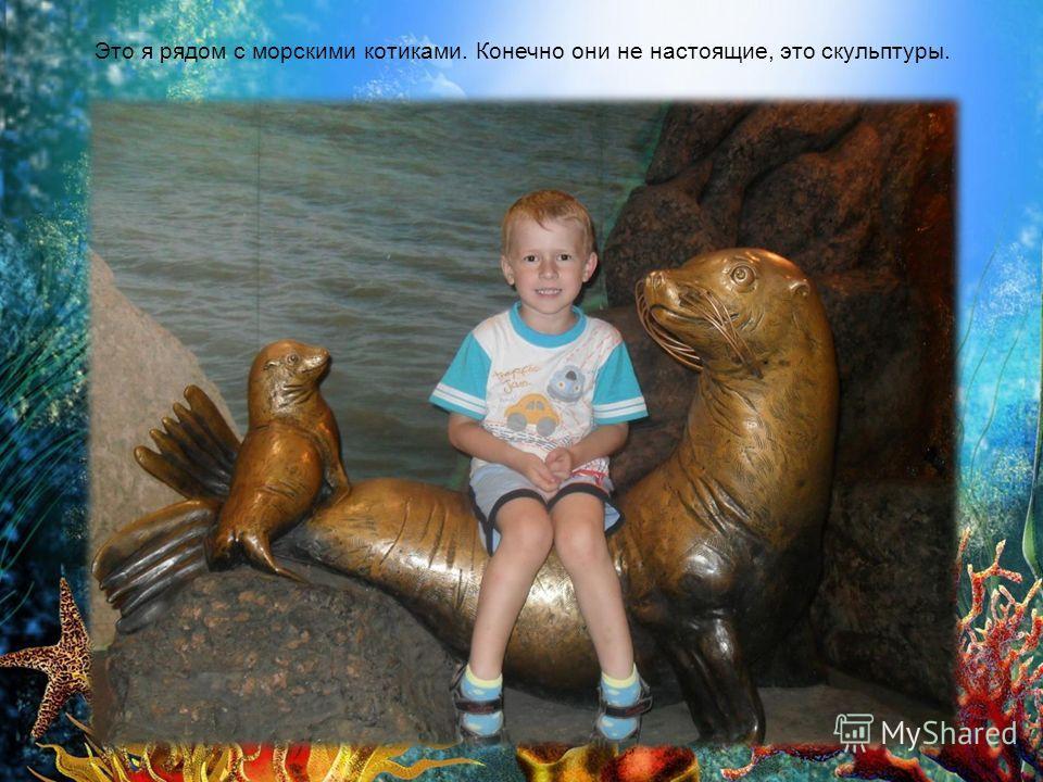 Это я рядом с морскими котиками. Конечно они не настоящие, это скульптуры.