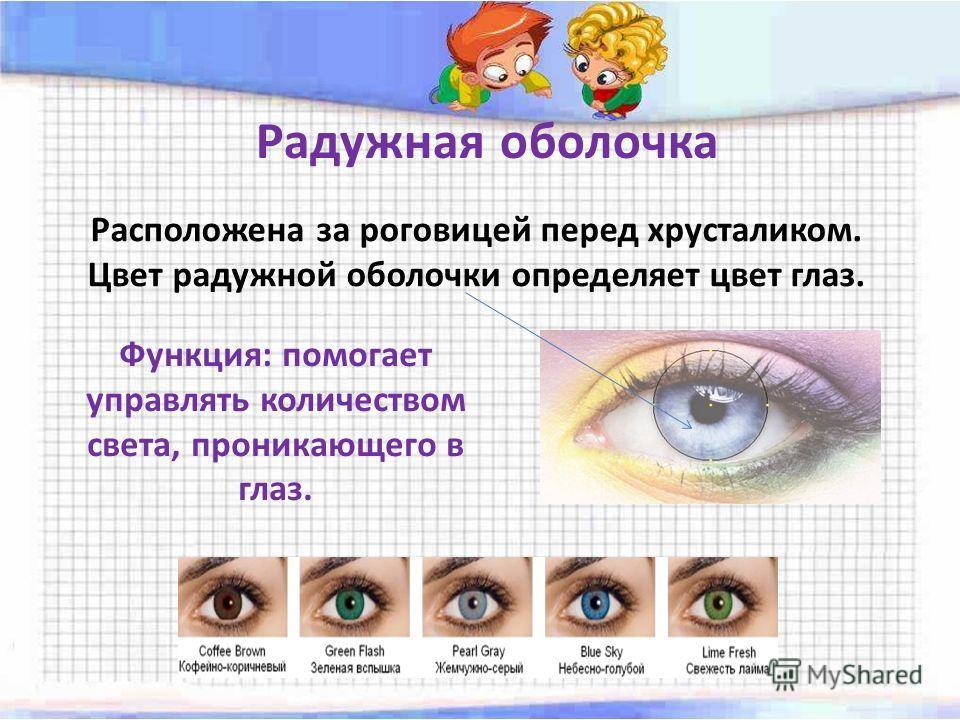 Радужная оболочка Расположена за роговицей перед хрусталиком. Цвет радужной оболочки определяет цвет глаз. Функция: помогает управлять количеством света, проникающего в глаз.