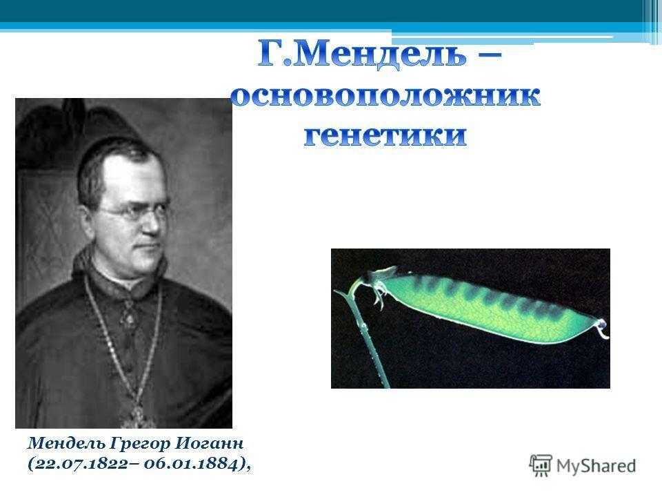 Мендель Грегор Иоганн (22.07.1822– 06.01.1884),