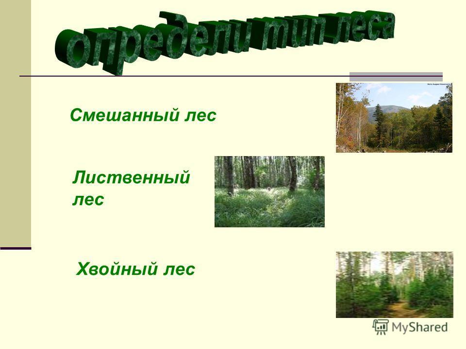 Смешанный лес Лиственный лес Хвойный лес