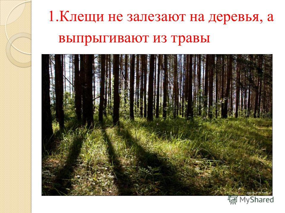 1. 1.Клещи не залезают на деревья, а выпрыгивают из травы