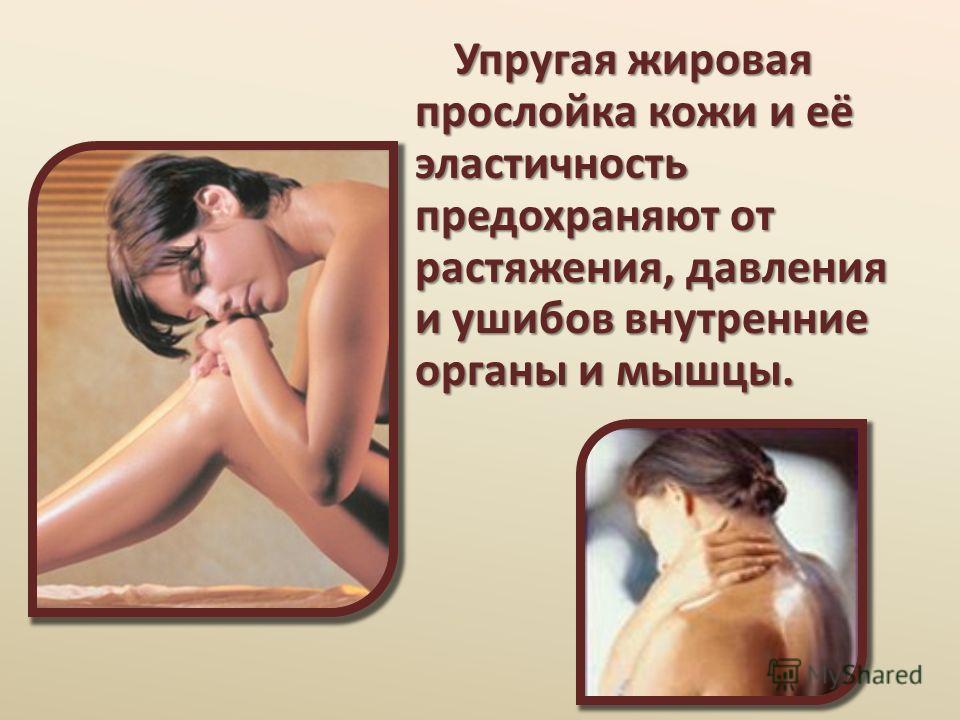 Упругая жировая прослойка кожи и её эластичность предохраняют от растяжения, давления и ушибов внутренние органы и мышцы. Упругая жировая прослойка кожи и её эластичность предохраняют от растяжения, давления и ушибов внутренние органы и мышцы.