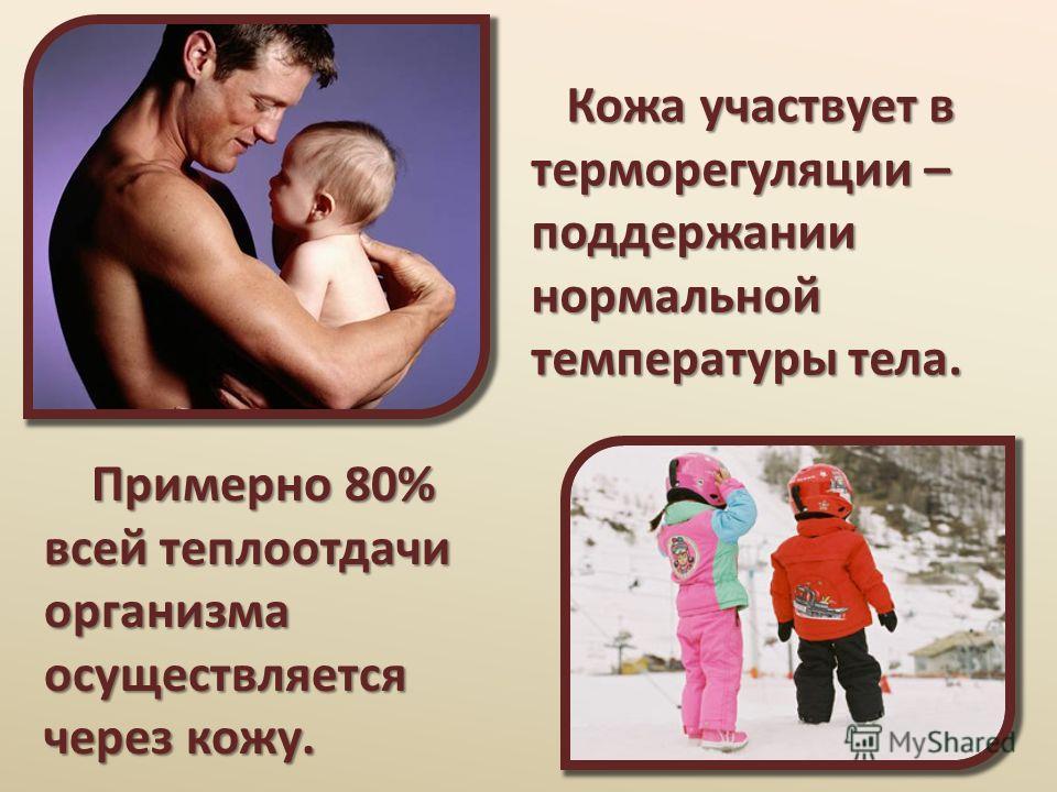Кожа участвует в терморегуляции – поддержании нормальной температуры тела. Кожа участвует в терморегуляции – поддержании нормальной температуры тела. Примерно 80% всей теплоотдачи организма осуществляется через кожу. Примерно 80% всей теплоотдачи орг