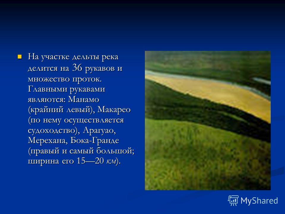 На участке дельты река делится на 36 рукавов и множество проток. Главными рукавами являются: Манамо (крайний левый), Макарео (по нему осуществляется судоходство), Арагуао, Мерехана, Бока-Гранде (правый и самый большой; ширина его 1520 км). На участке