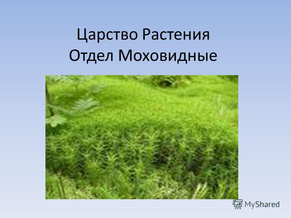 Царство Растения Отдел Моховидные