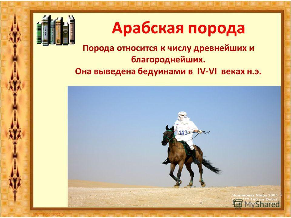 Арабская порода Порода относится к числу древнейших и благороднейших. Она выведена бедуинами в IV-VI веках н.э.