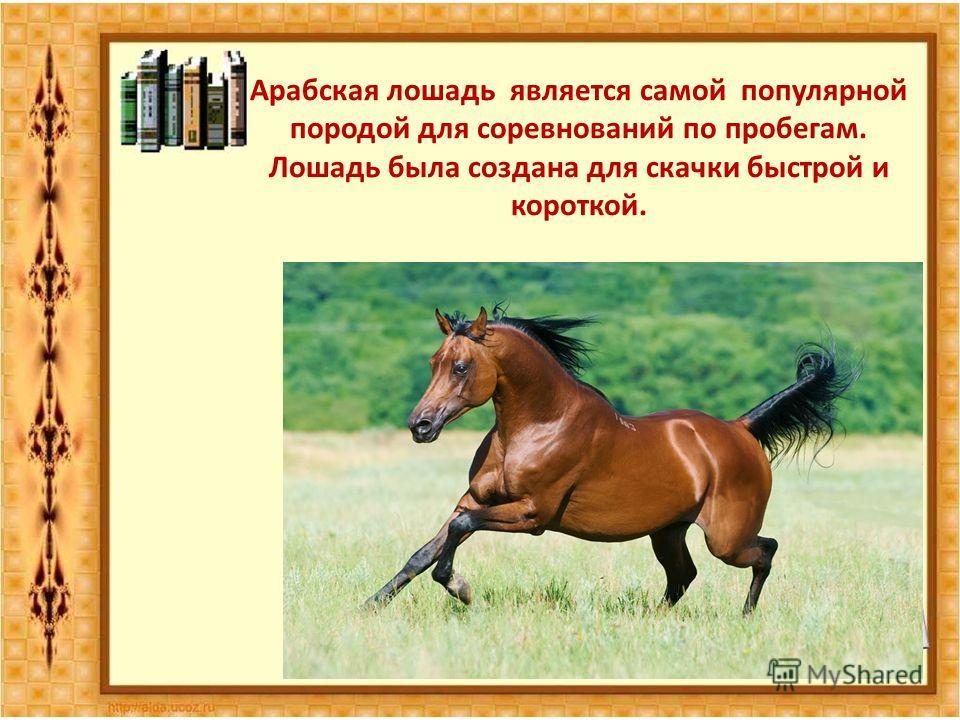 Арабская лошадь является самой популярной породой для соревнований по пробегам. Лошадь была создана для скачки быстрой и короткой.