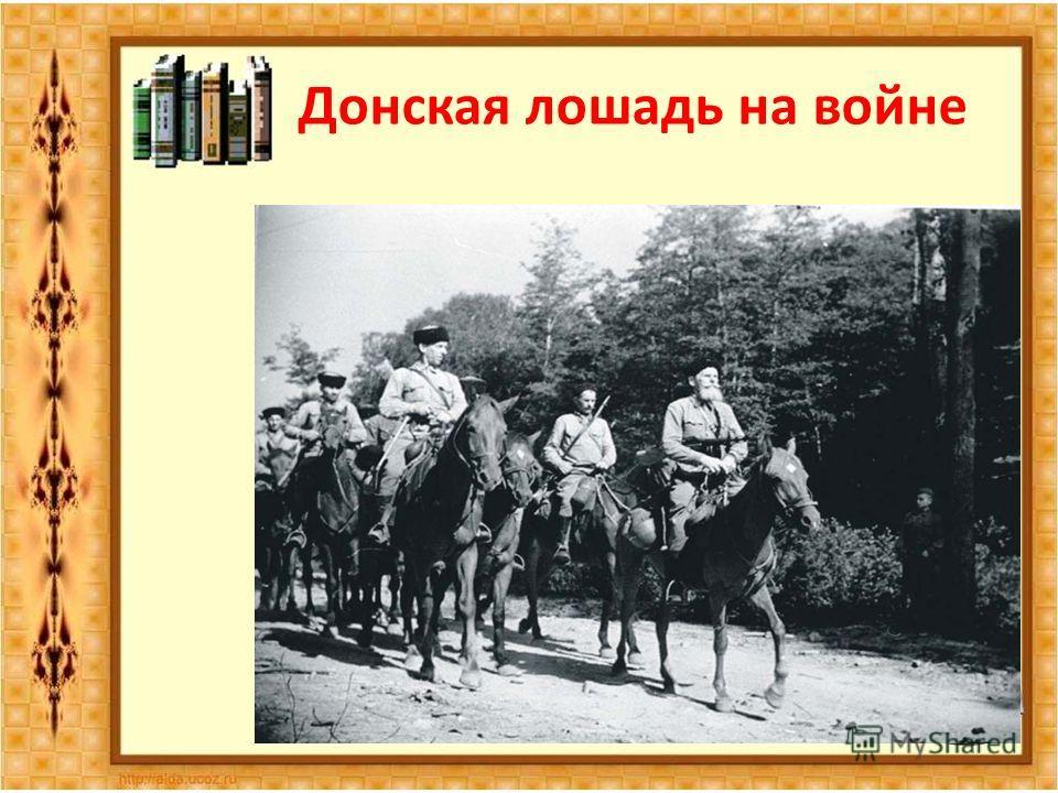 Донская лошадь на войне