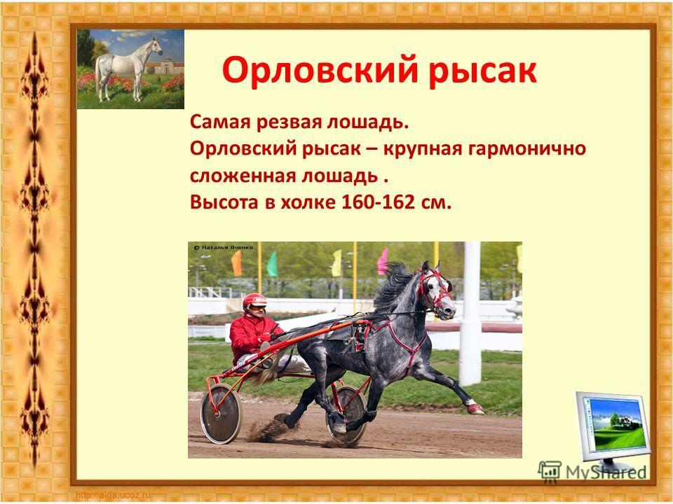 Самая резвая лошадь. Орловский рысак – крупная гармонично сложенная лошадь. Высота в холке 160-162 см.