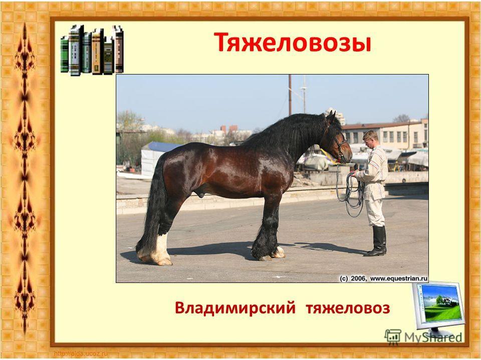 Тяжеловозы Владимирский тяжеловоз