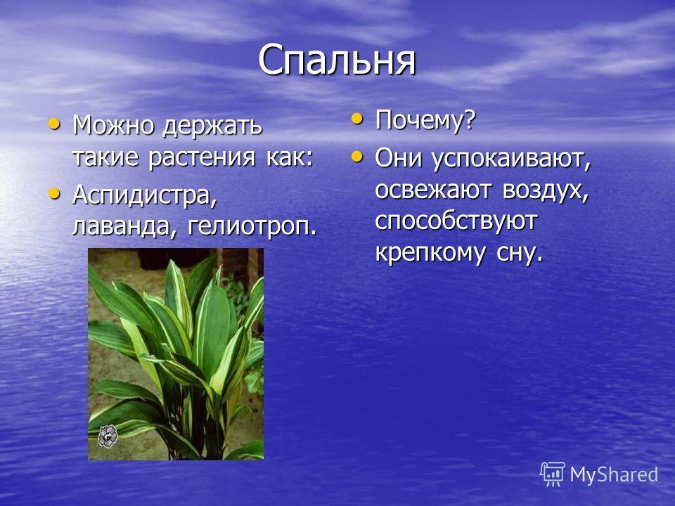 Спальня Можно держать такие растения как: Можно держать такие растения как: Аспидистра, лаванда, гелиотроп. Аспидистра, лаванда, гелиотроп. Почему? Почему? Они успокаивают, освежают воздух, способствуют крепкому сну. Они успокаивают, освежают воздух,