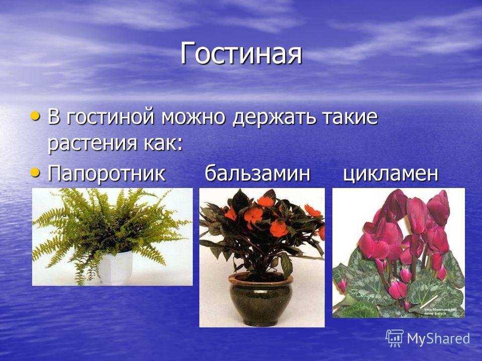 Гостиная В гостиной можно держать такие растения как: В гостиной можно держать такие растения как: Папоротник бальзамин цикламен Папоротник бальзамин цикламен