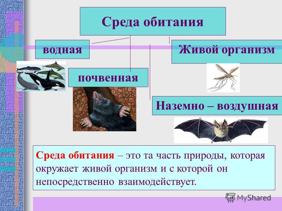 Среда обитания почвенная Наземно – воздушная водная Живой организм Среда обитания – это та часть природы, которая окружает живой организм и с которой он непосредственно взаимодействует.