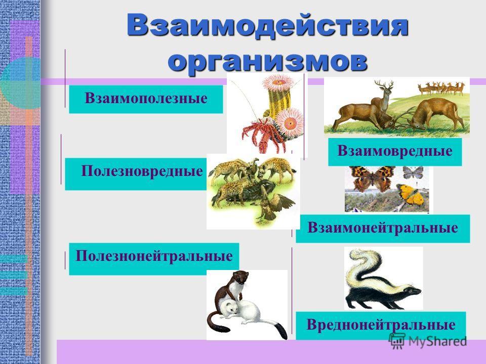 Взаимодействия организмов Взаимополезные Полезновредные Полезнонейтральные Взаимонейтральные Взаимовредные Вреднонейтральные