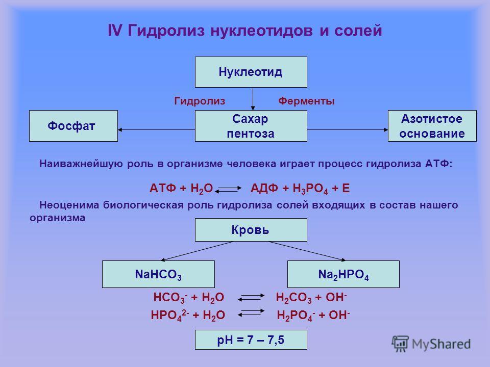 IV Гидролиз нуклеотидов и солей Гидролиз Ферменты Наиважнейшую роль в организме человека играет процесс гидролиза АТФ: АТФ + Н 2 О АДФ + Н 3 РО 4 + Е Неоценима биологическая роль гидролиза солей входящих в состав нашего организма НСО 3 - + Н 2 О Н 2