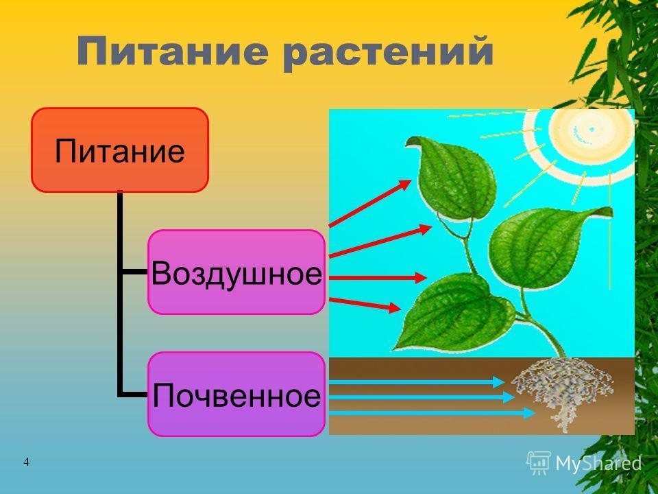 4 Питание растений Питание Воздушно е Почвенное