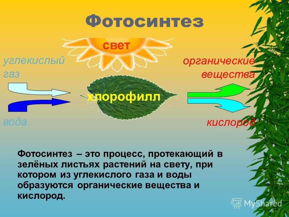 Фотосинтез Фотосинтез – это процесс, протекающий в зелёных листьях растений на свету, при котором из углекислого газа и воды образуются органические вещества и кислород. свет хлорофилл вода углекислый газ органические вещества кислород