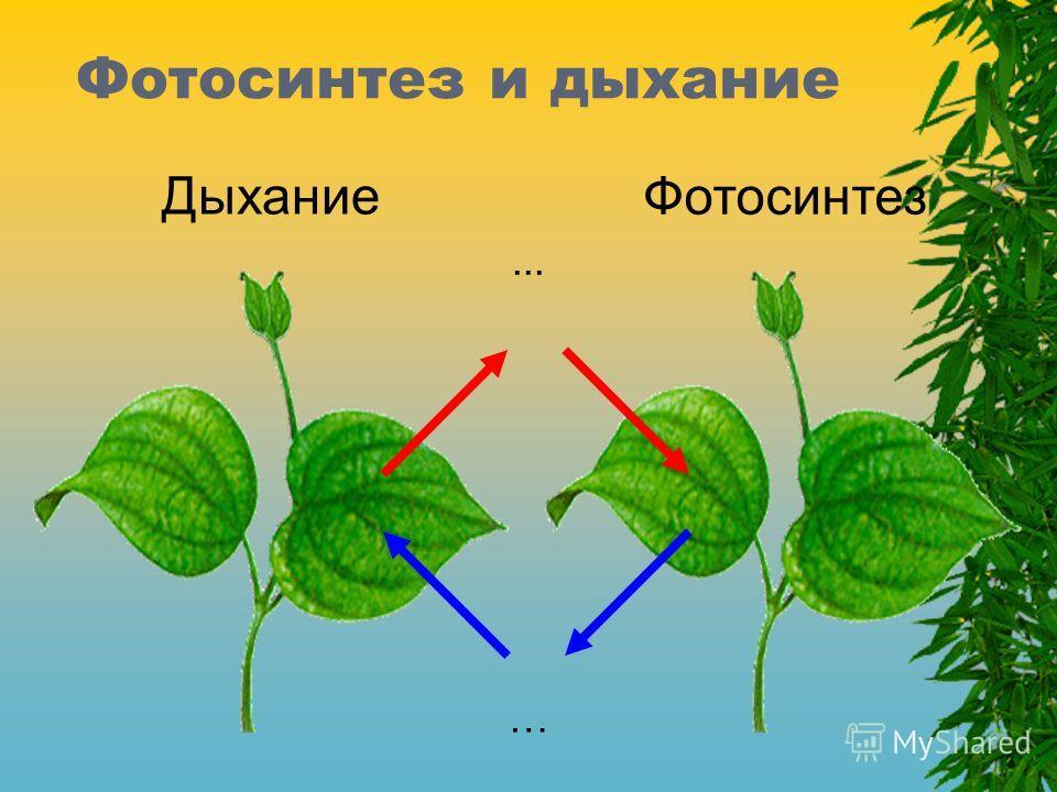 Фотосинтез и дыхание Фотосинтез Дыхание …...