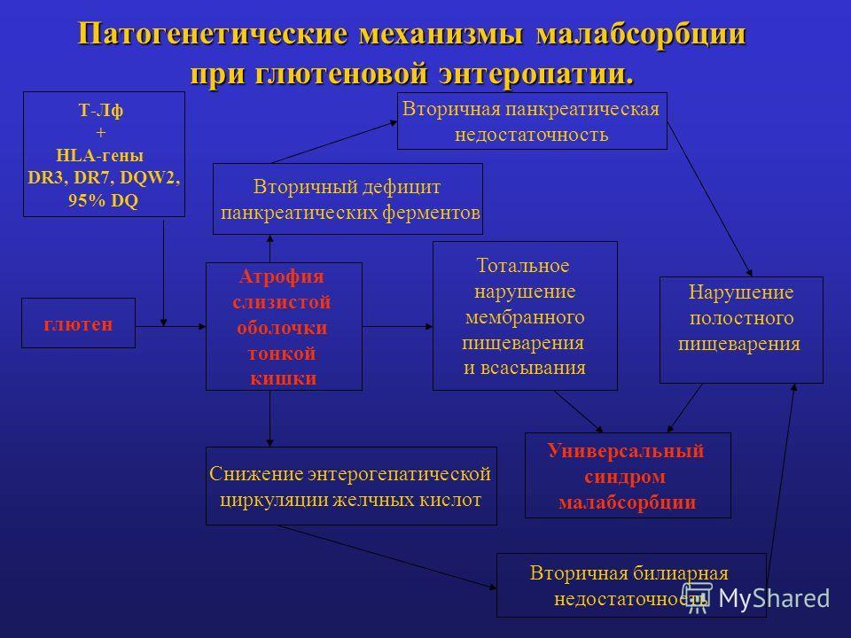 Патогенетические механизмы малабсорбции при глютеновой энтеропатии. глютен Атрофия слизистой оболочки тонкой кишки Вторичный дефицит панкреатических ферментов Вторичная панкреатическая недостаточность Снижение энтерогепатической циркуляции желчных ки