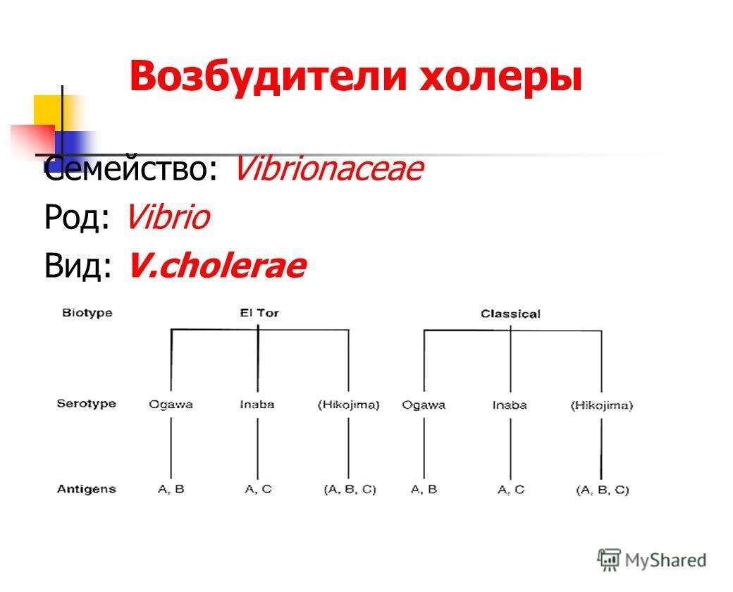 Возбудители холеры Семейство: Vibrionaceae Род: Vibrio Вид: V.cholerae