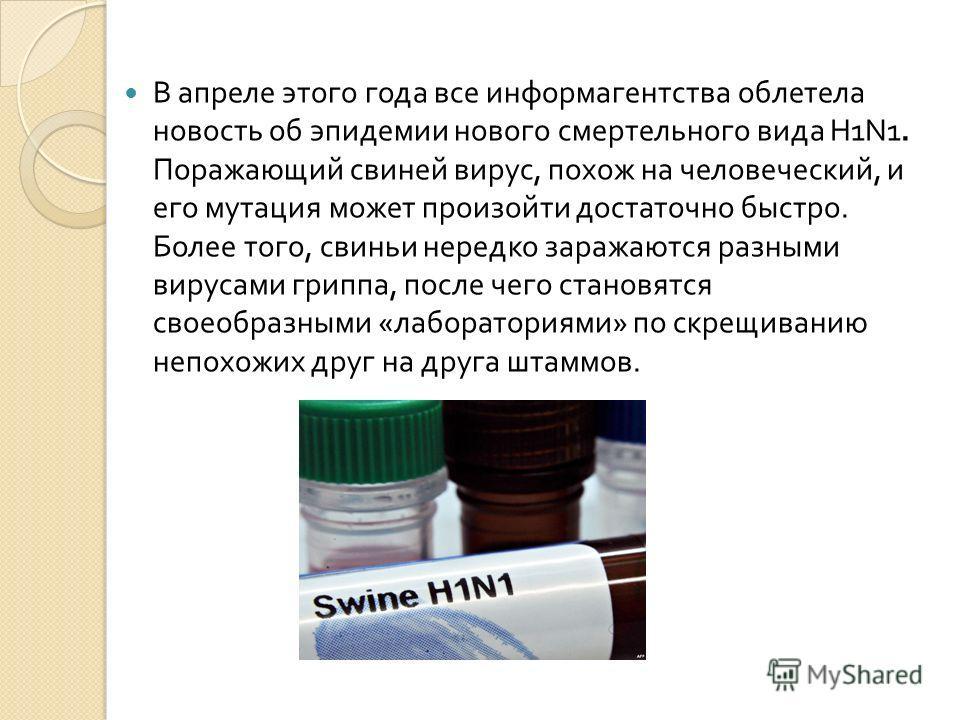 В апреле этого года все информагентства облетела новость об эпидемии нового смертельного вида H1N1. Поражающий свиней вирус, похож на человеческий, и его мутация может произойти достаточно быстро. Более того, свиньи нередко заражаются разными вирусам