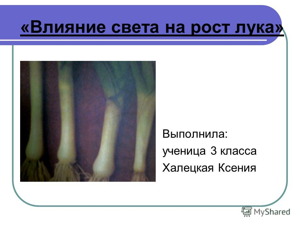«Влияние света на рост лука» Выполнила: ученица 3 класса Халецкая Ксения
