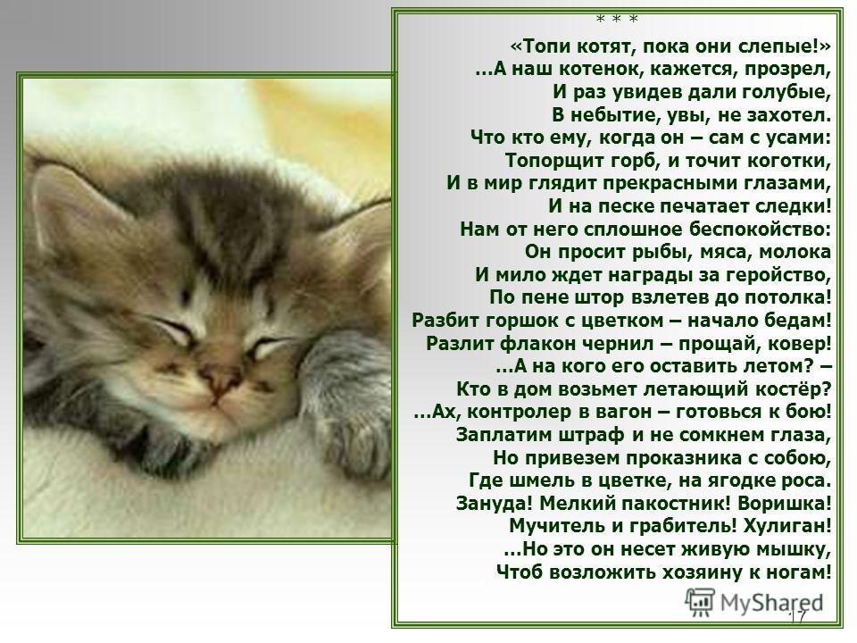 17 * * * «Топи котят, пока они слепые!»...А наш котенок, кажется, прозрел, И раз увидев дали голубые, В небытие, увы, не захотел. Что кто ему, когда он – сам с усами: Топорщит горб, и точит коготки, И в мир глядит прекрасными глазами, И на песке печа