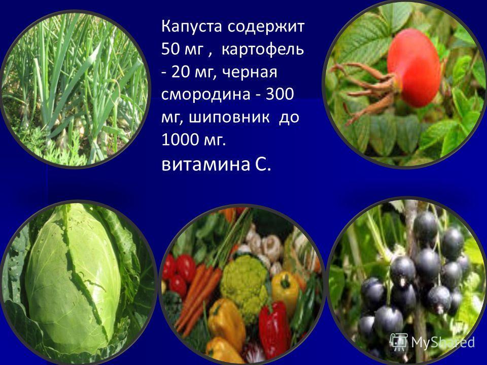 Капуста содержит 50 мг, картофель - 20 мг, черная смородина - 300 мг, шиповник до 1000 мг. витамина С.