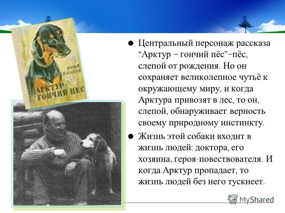 Центральный персонаж рассказа Арктур – гончий пёс – пёс, слепой от рождения. Но он сохраняет великолепное чутьё к окружающему миру, и когда Арктура привозят в лес, то он, слепой, обнаруживает верность своему природному инстинкту. Жизнь этой собаки вх
