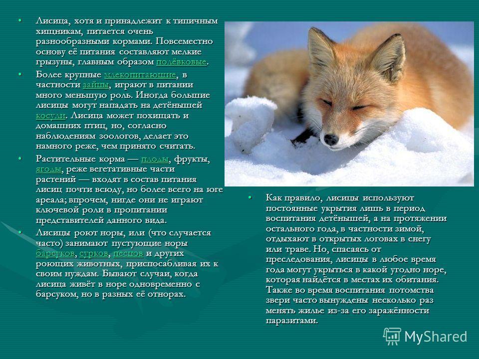 Лисица, хотя и принадлежит к типичным хищникам, питается очень разнообразными кормами. Повсеместно основу её питания составляют мелкие грызуны, главным образом полёвковые.Лисица, хотя и принадлежит к типичным хищникам, питается очень разнообразными к