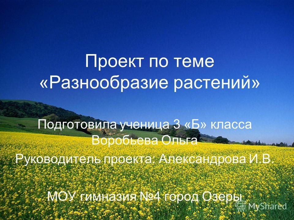 Александрова Хвойные Растения