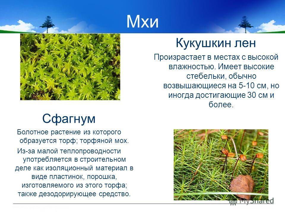 Мхи Сфагнум Болотное растение из которого образуется торф; торфяной мох. Из-за малой теплопроводности употребляется в строительном деле как изоляционный материал в виде пластинок, порошка, изготовляемого из этого торфа; также дезодорирующее средство.