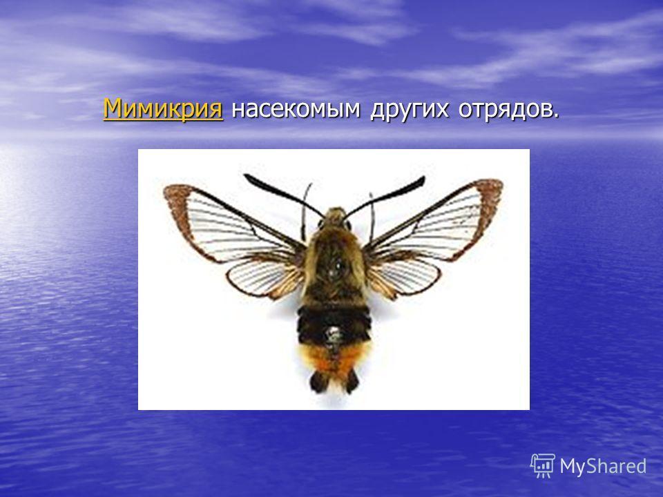 МимикрияМимикрия насекомым других отрядов. Мимикрия