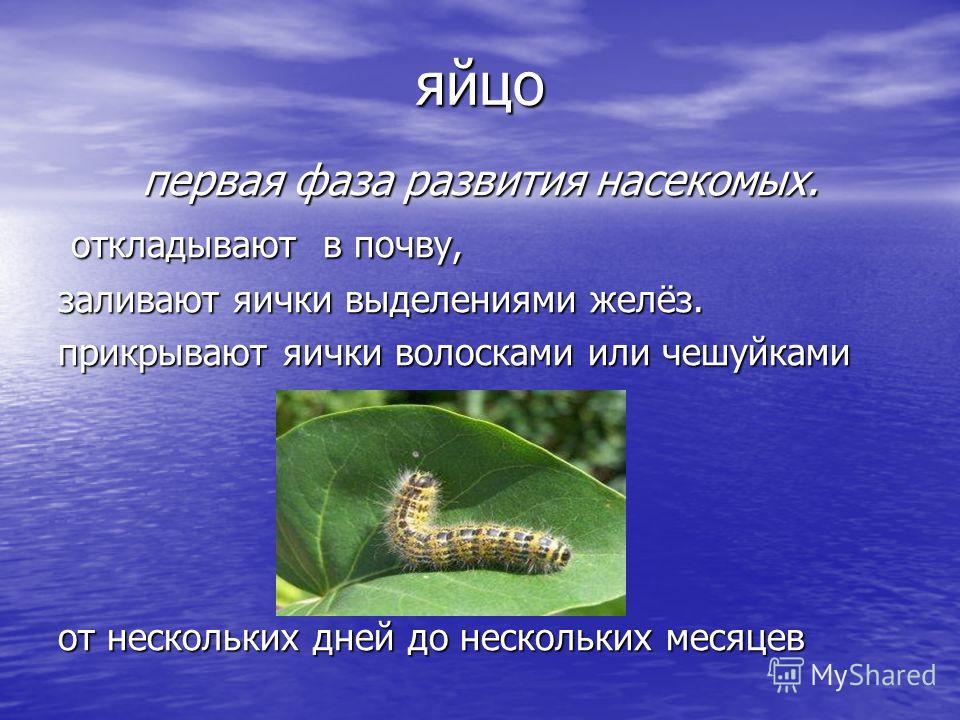 яйцо первая фаза развития насекомых. откладывают в почву, откладывают в почву, заливают яички выделениями желёз. прикрывают яички волосками или чешуйками от нескольких дней до нескольких месяцев