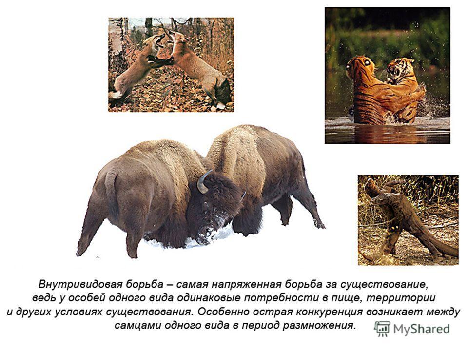 19.02.2014Братякова С.Б.12