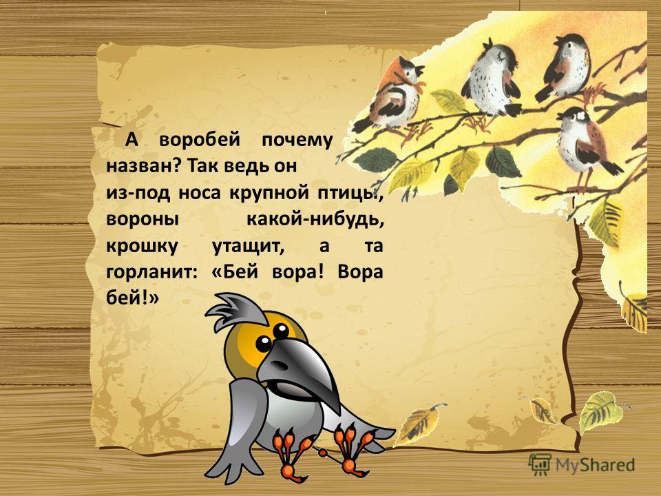 А воробей почему так назван? Так ведь он из-под носа крупной птицы, вороны какой-нибудь, крошку утащит, а та горланит: «Бей вора! Вора бей!»